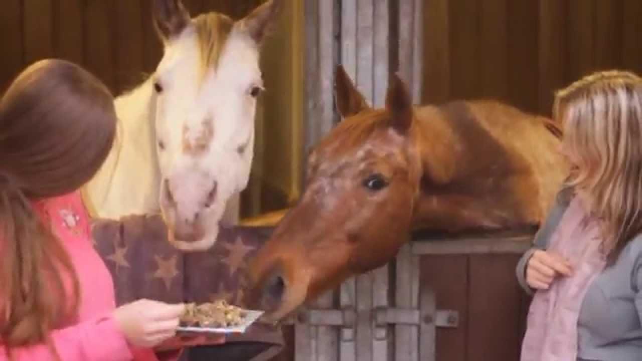 DIY | Maak je eigen paarden pepernoten of paardenkoekjes!