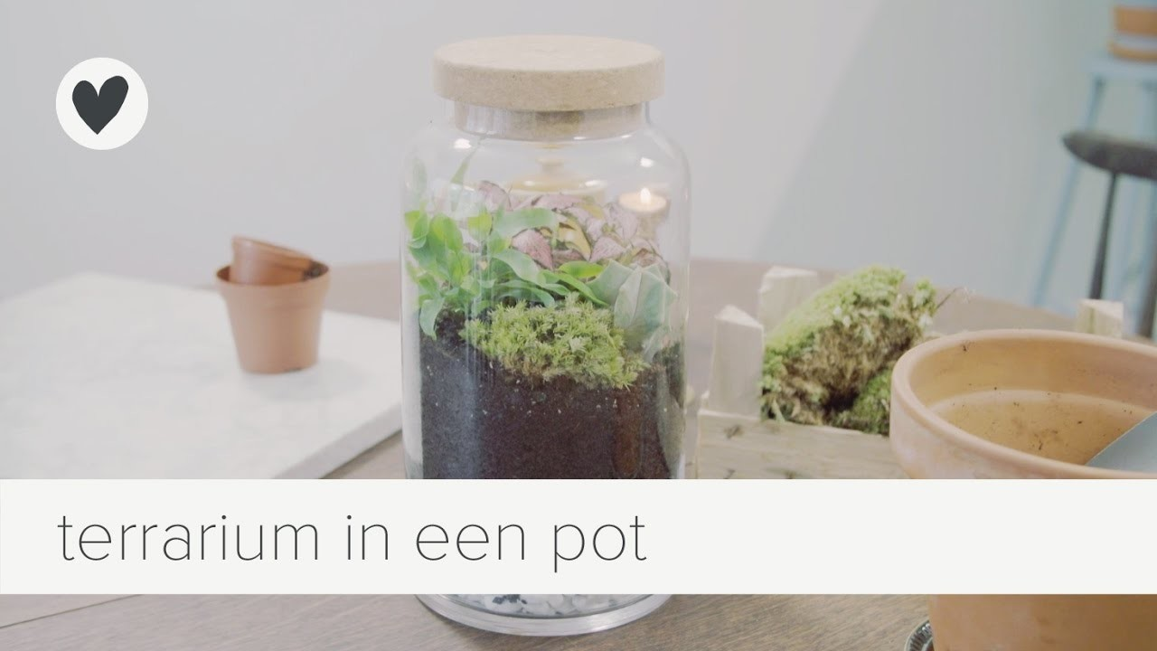 Een mini-ecosysteem | diy | vtwonen